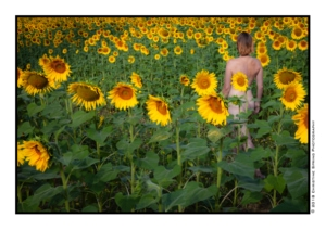 woman standing in sunflowers